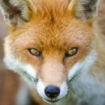 Profile picture of Fox Jenkins