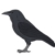 Profile picture of Billy Birdy